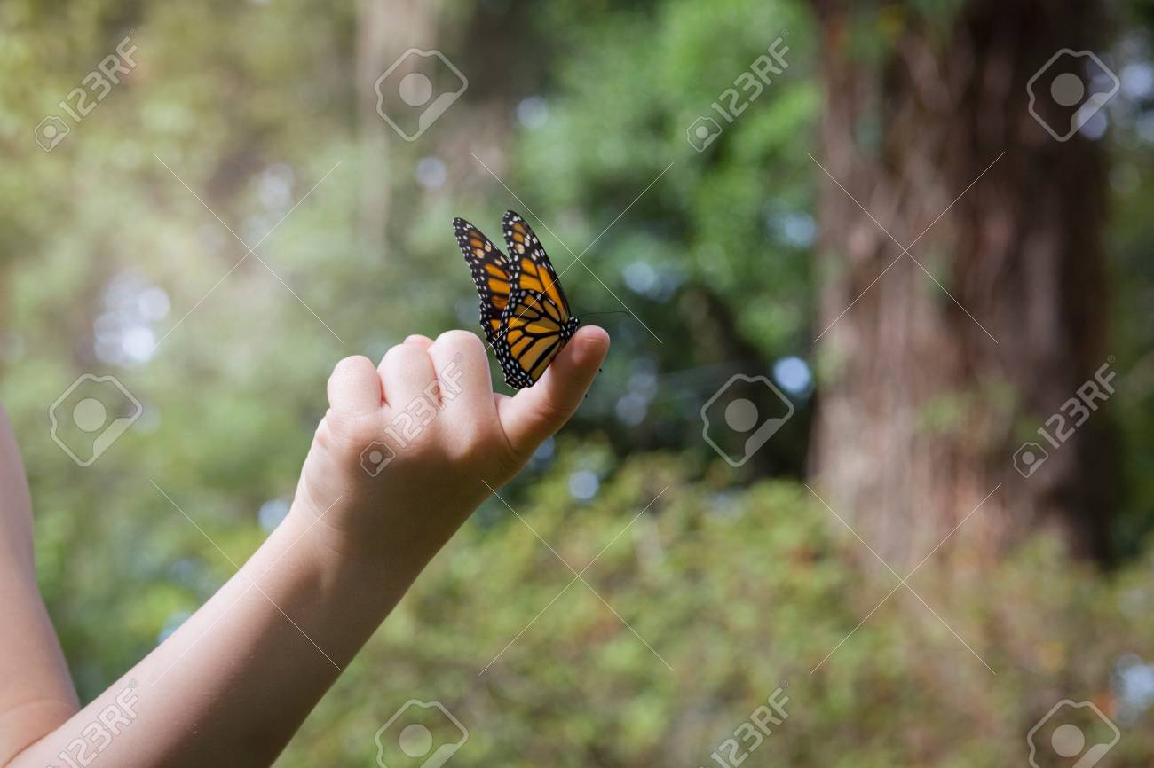 fd0e48c8a Girls Holding Monarch Butterfly On Finger Stock Photo, Picture And ...
