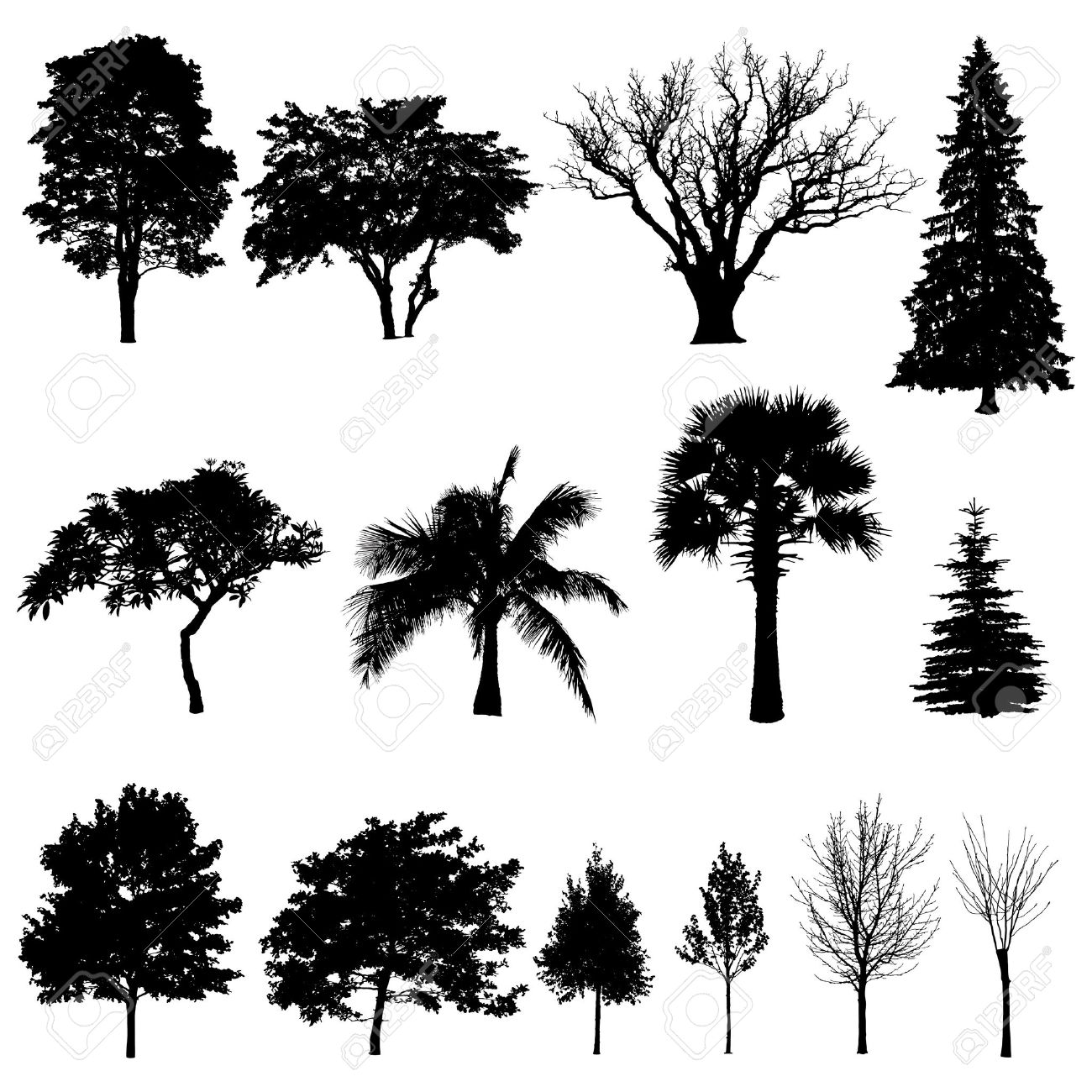 evergreen tree images u0026 stock pictures royalty free evergreen
