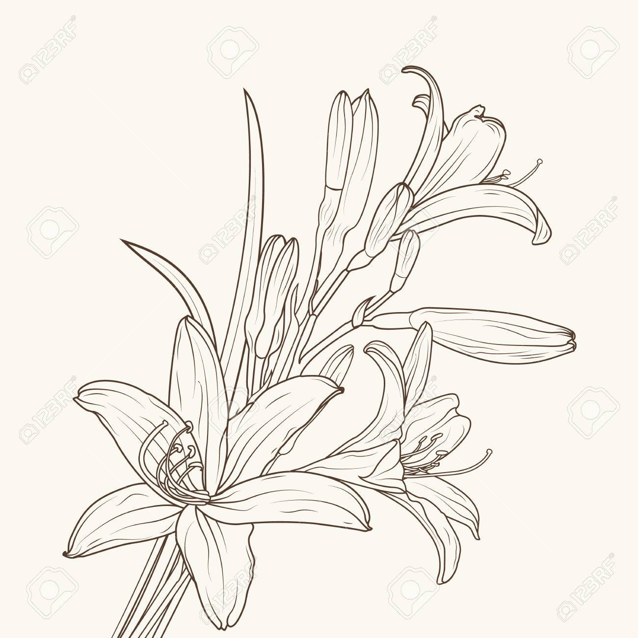 Isolated Elegant White Lily Flowers With Stem Leaves And Prominent