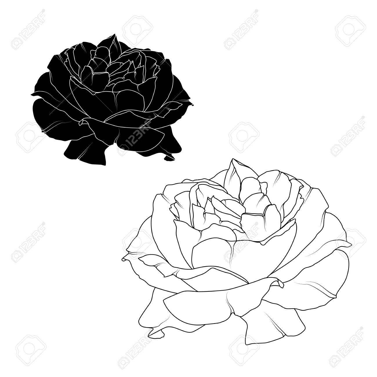 Fleur De Fleur Rose Floraison Realiste Isole Contour Detaille Noir
