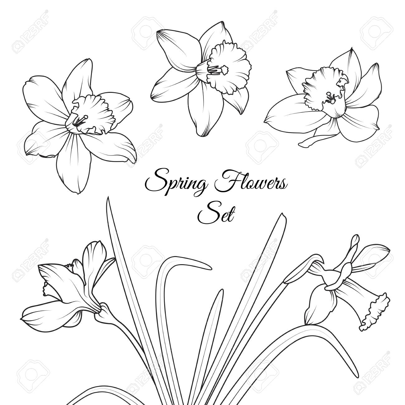 narcissus daffodil spring flowers reusable isolated elements