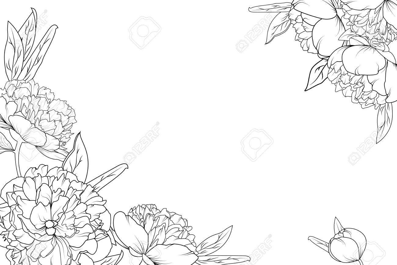 Les Fleurs De Jardin De Pivoine Fleurissent En Noir Et Blanc Modele D Element De Decoration De Cadre De Bordure D Angle Disposition Horizontale Du