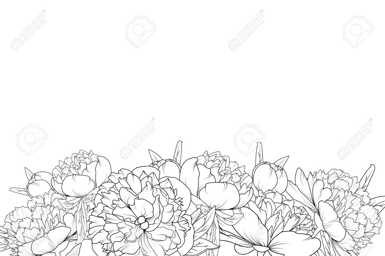 Peony Spring Summer Flowers Shrub Bloom Blossom Black And White Detailed Outline Sketch Drawing Bottom