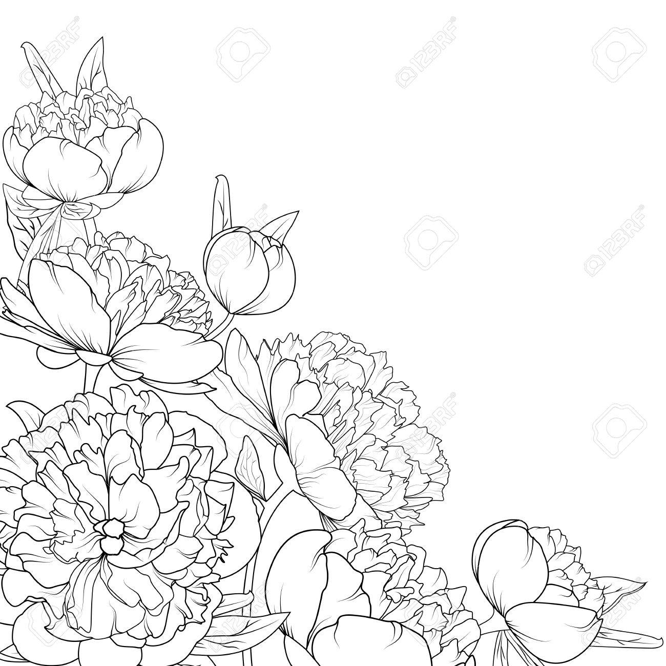 Peony Rose Garden Spring Summer Flowers Black And White Detailed