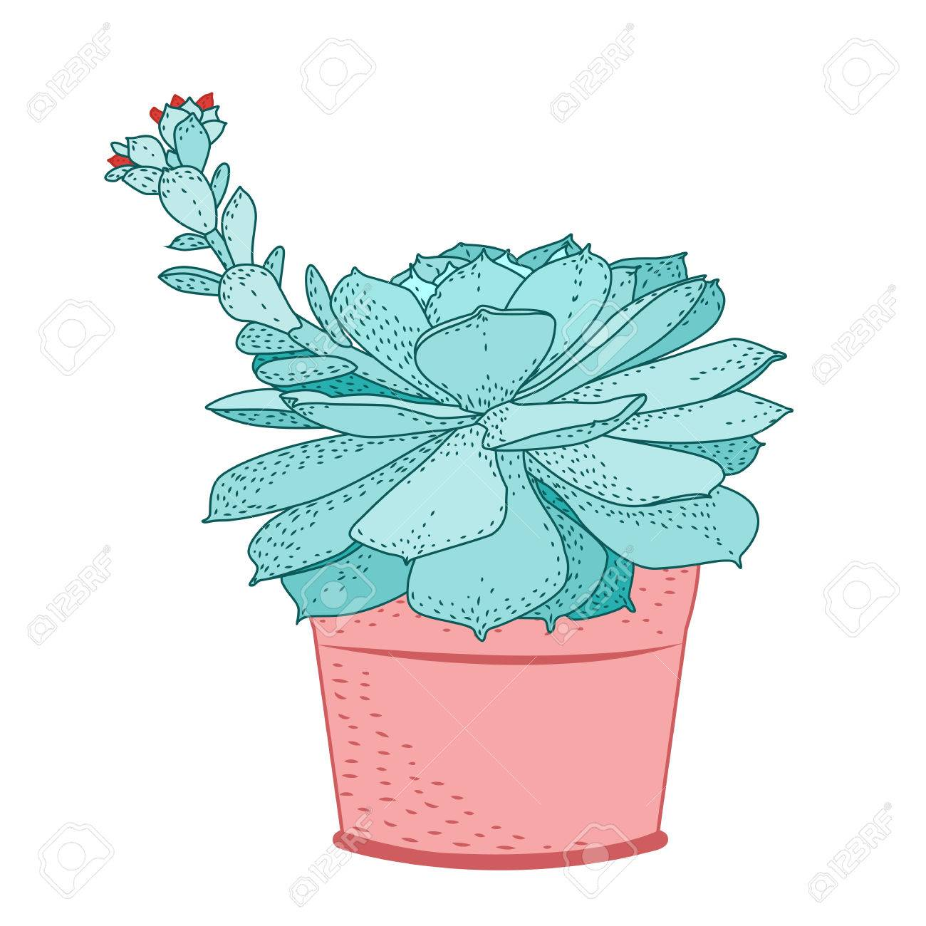 Succulent Plant In Rustic Pot Green Blue Turquoise Fleshy Thick Leaves Stem With Small