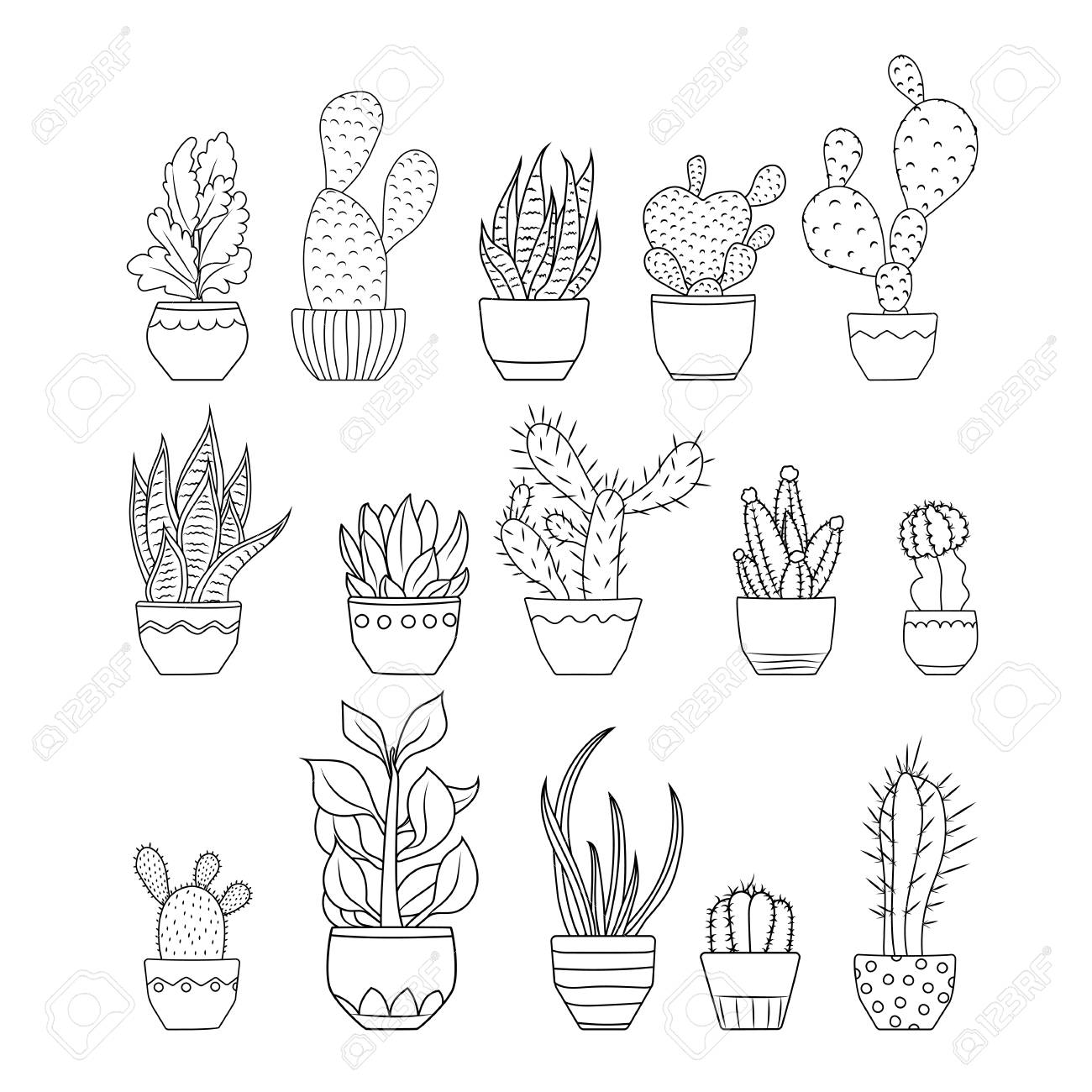 Various Exotic Cactus Succulent Flowers Species Planted In Pots Royalty Free Cliparts Vectors And Stock Illustration Image 99484691