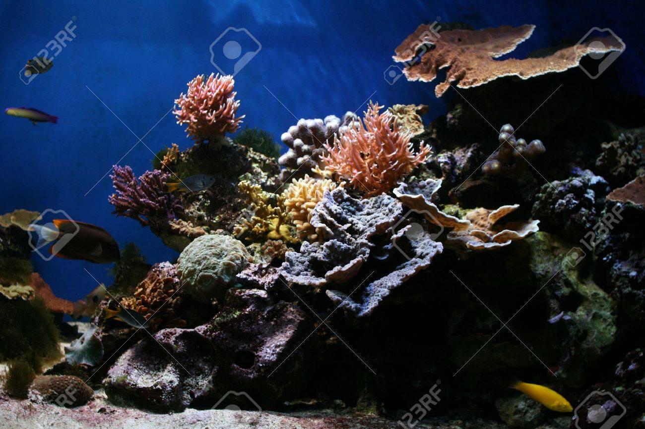 Marine Fish - Tropical Coral Reef Stock Photo - 4616382