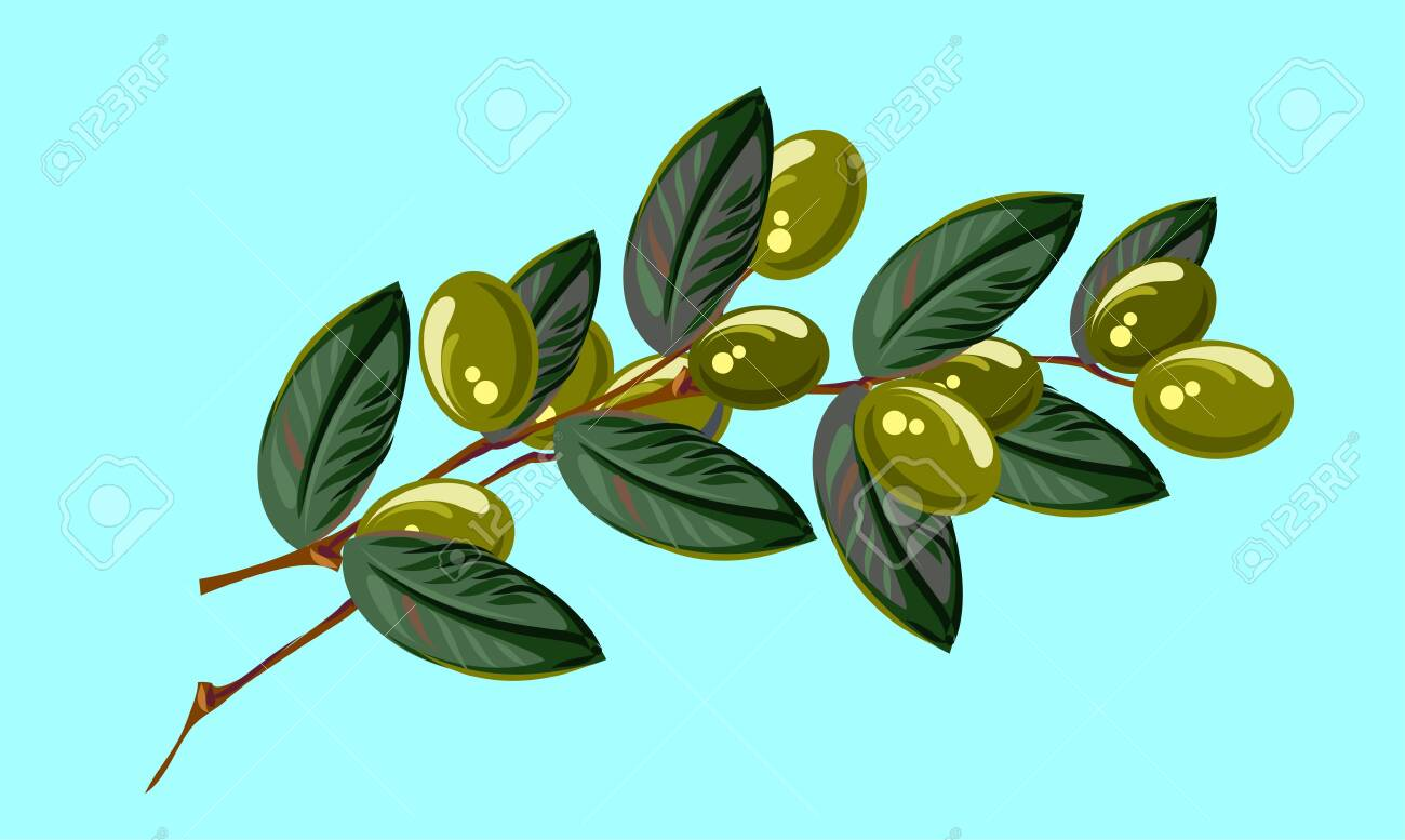 Branch with olives, freehand drawing - 126885288
