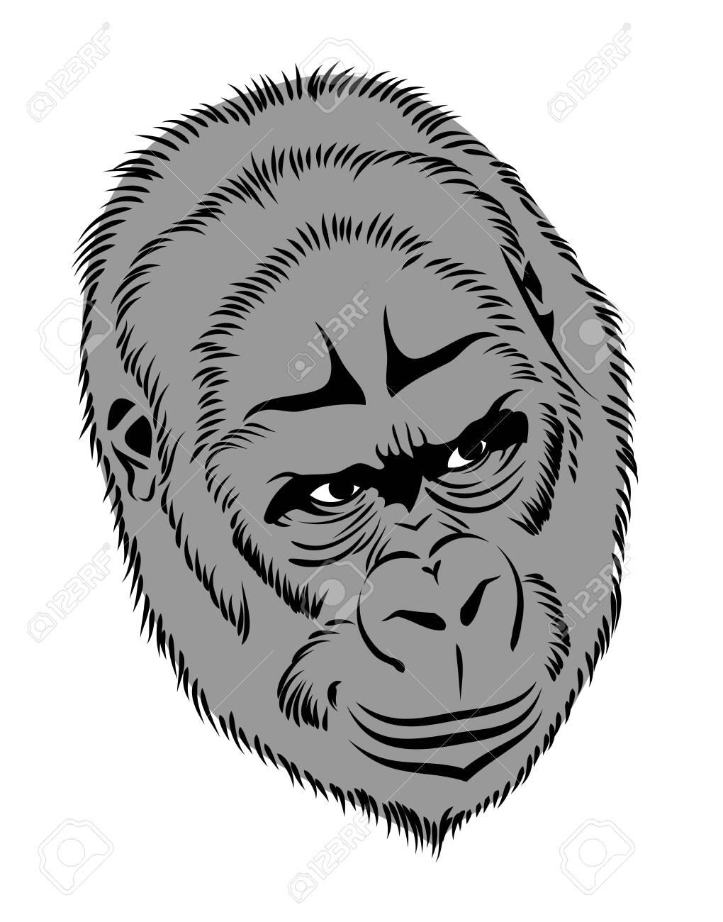 Portrait of a gorilla, monkey - 130864042