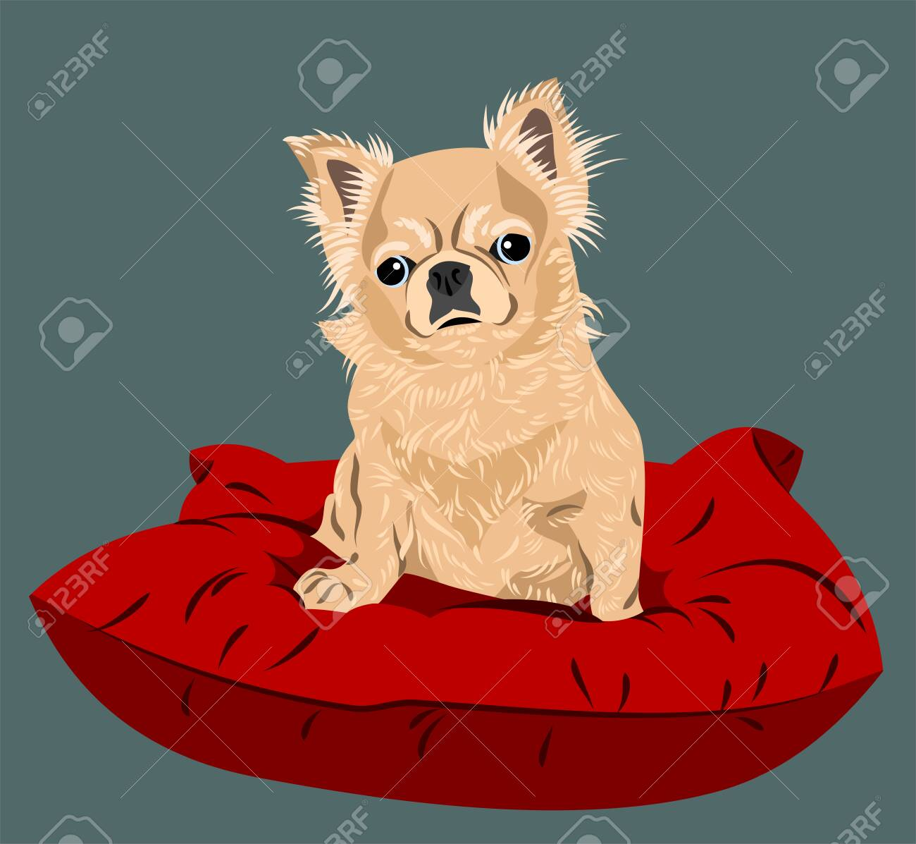 Funny and cute chihuahua dog portrait - 130800585