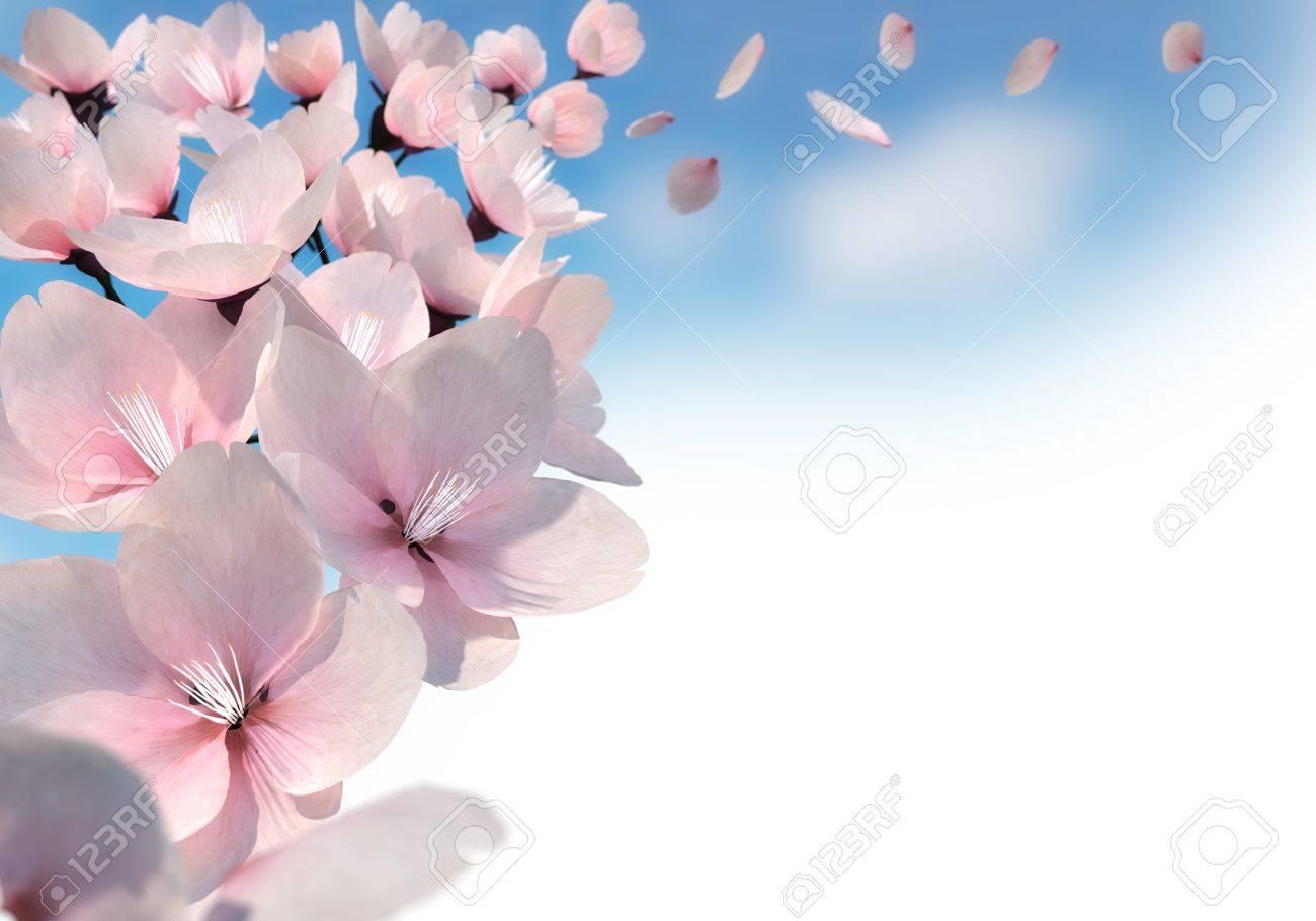 3D rendering of pink cherry blossoms Standard-Bild - 20416172