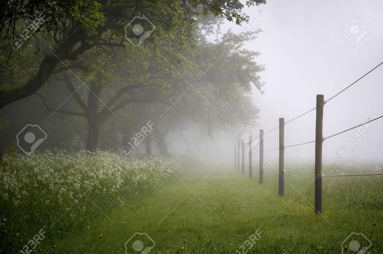Paddok with early morning fog Standard-Bild - 26047731