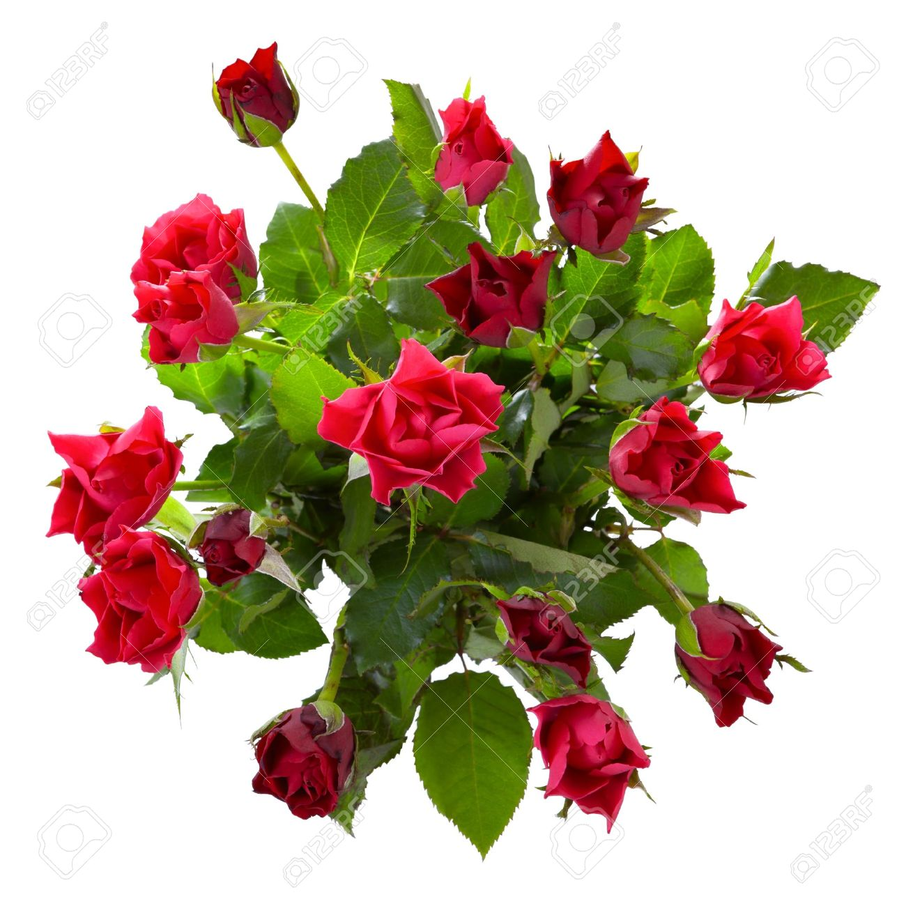Top View Of Red Roses Bouquet Isolated On White Background Stock