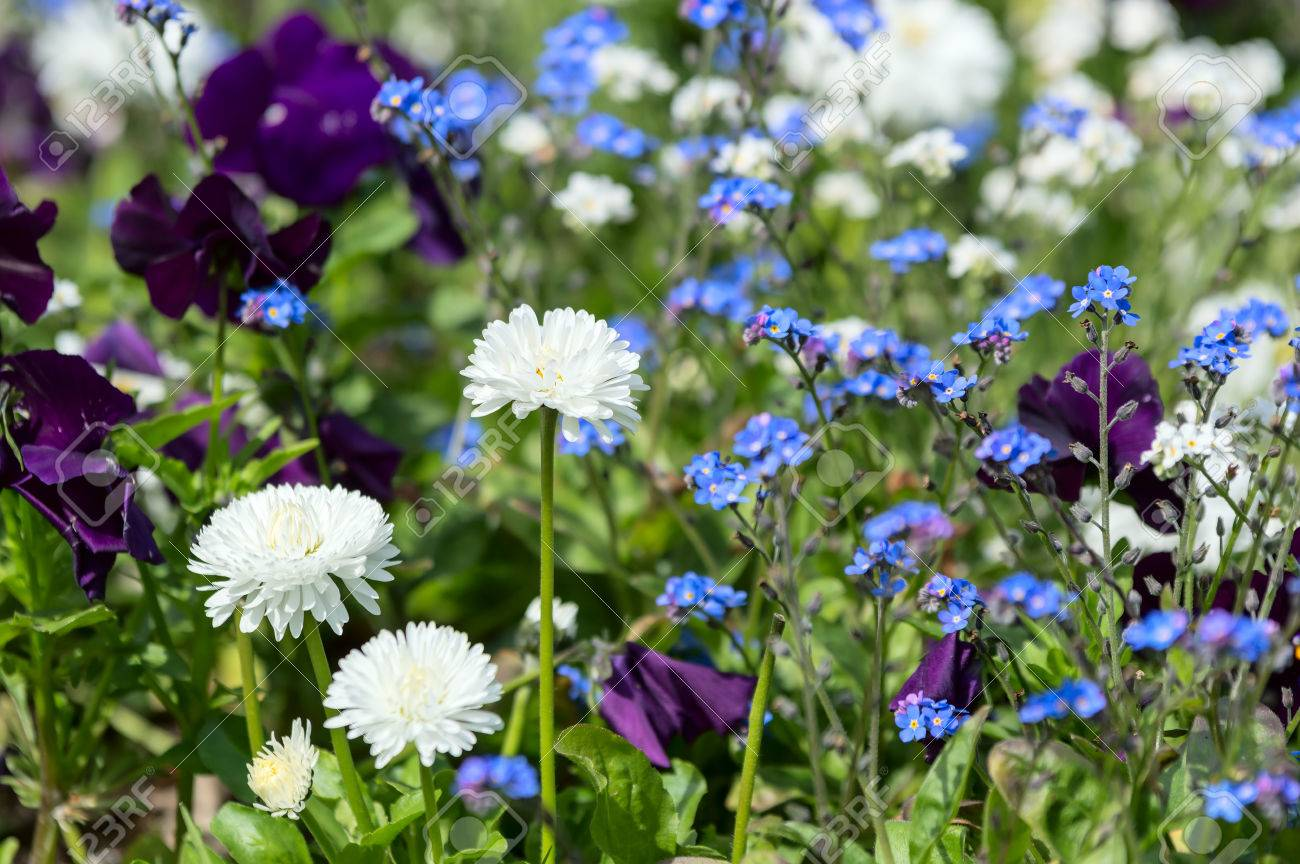 Flowerbed With Mixed Flowers In White And Blue Colors Focus Stock