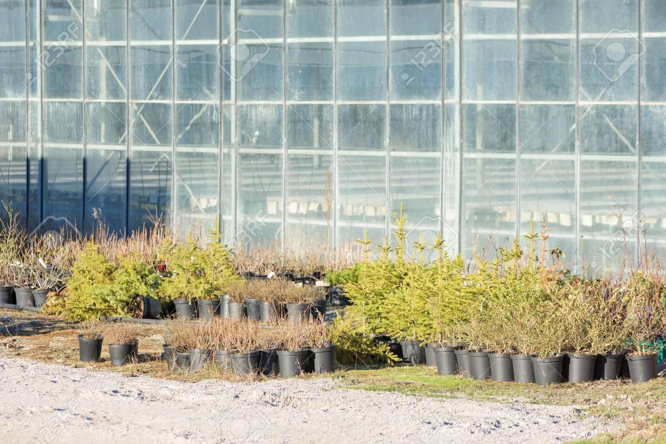Boom In Pot Buiten.Winterharde Planten Staan Buiten Een Kas Planten En Jonge Bomen Staan In Zwart Plastic Potten Greenhouse Met Doorzichtige Glazen Ramen In De