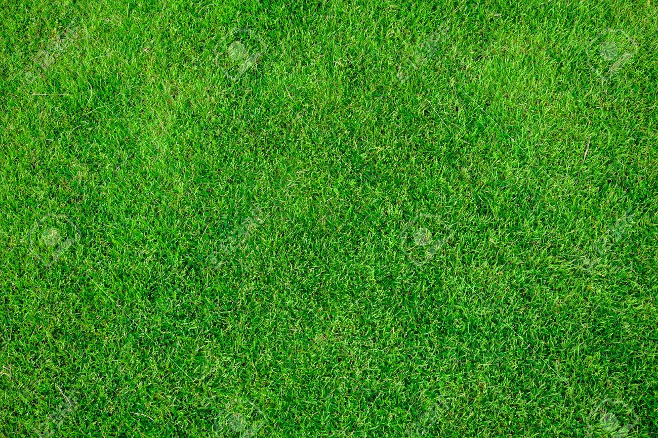 Grass Field Texture Intended Grass Field Texture Stock Photo 69737695 Field Texture Photo Picture And Royalty Free Image
