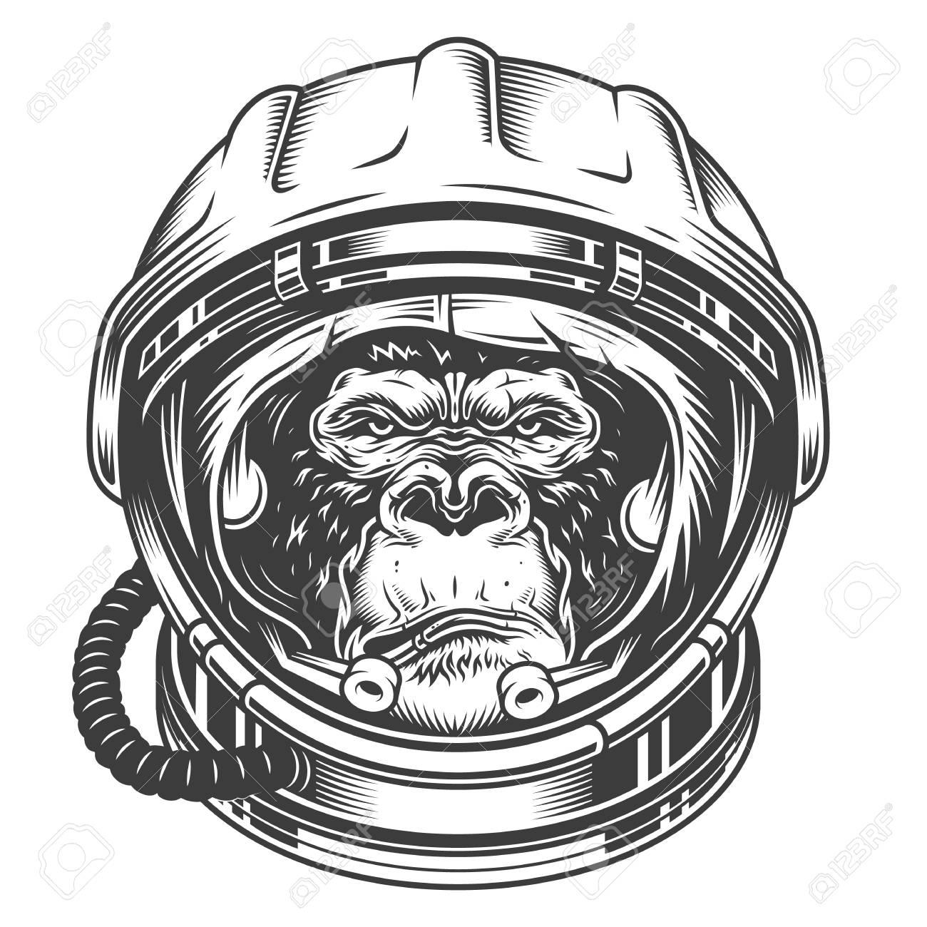 Head of gorilla - 104040532