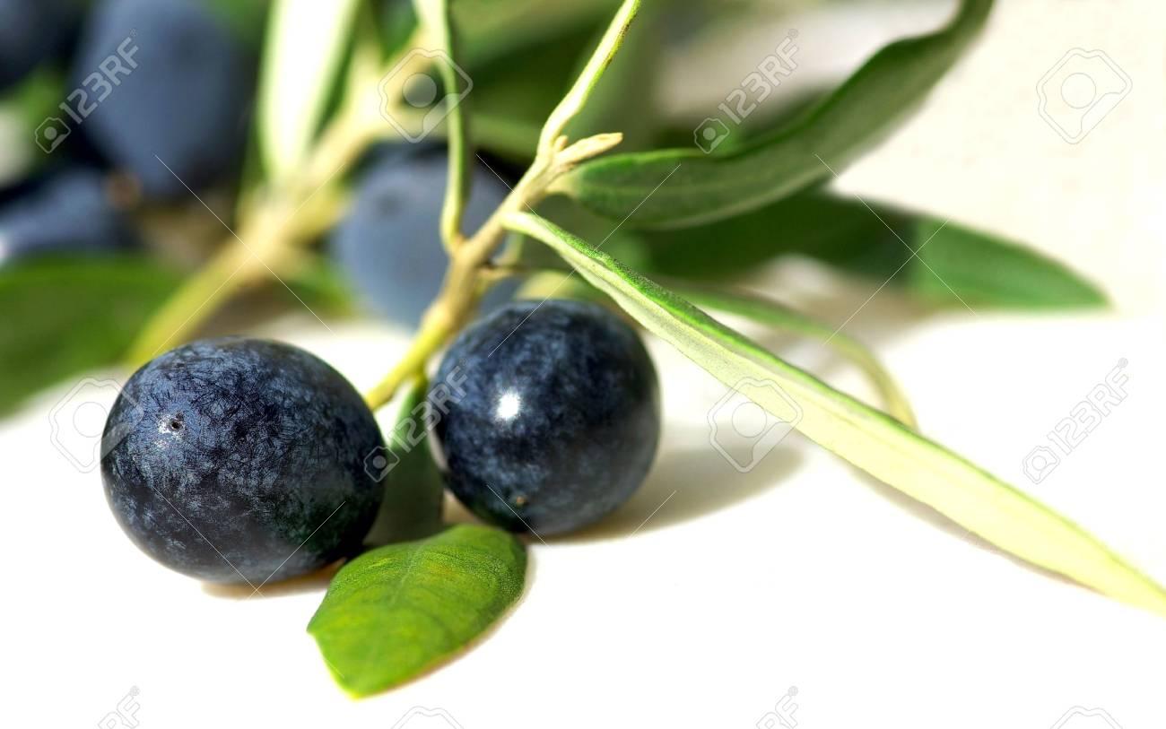 Closeup of mature olives. Stock Photo - 5195312