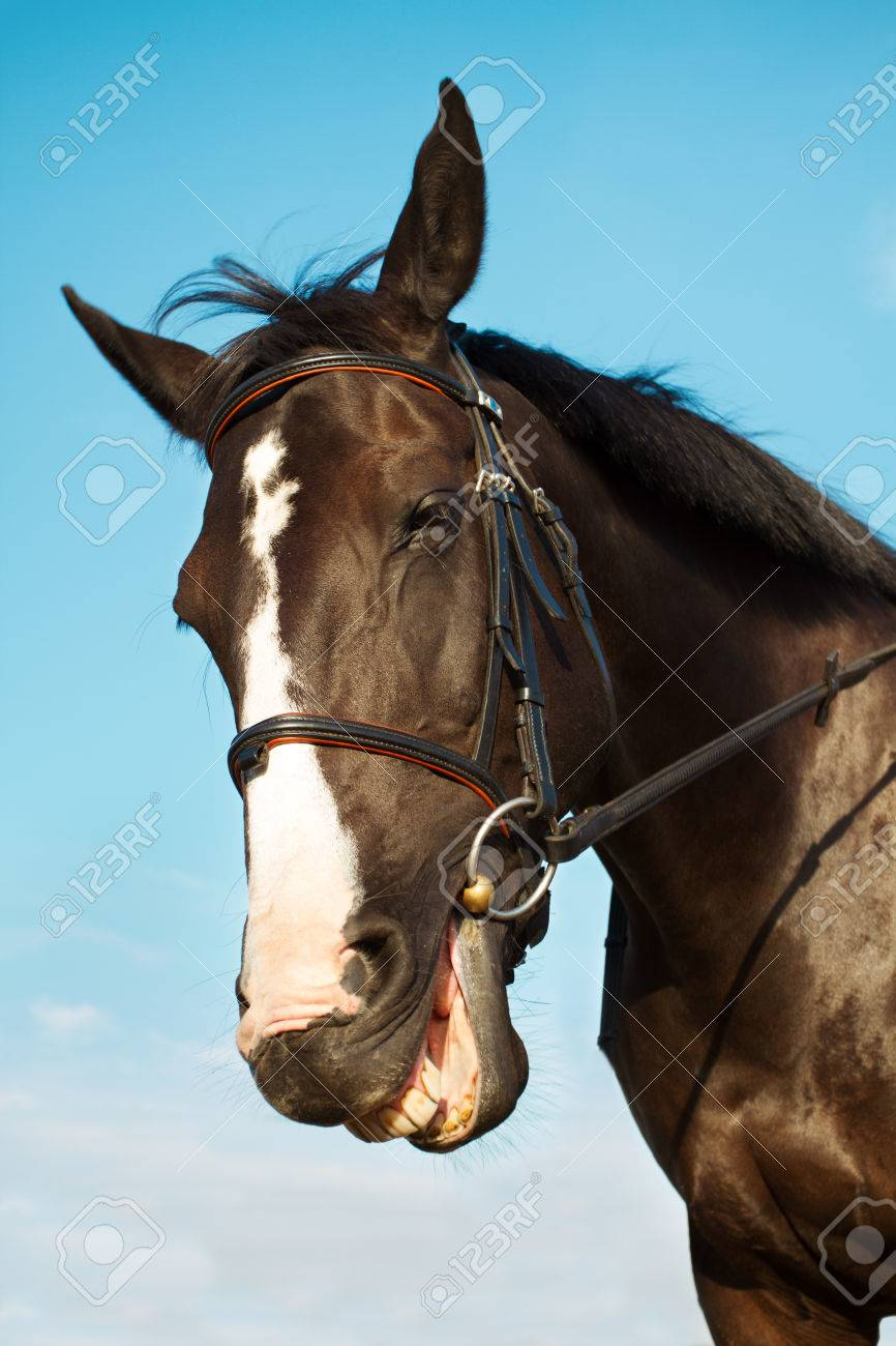 Funny Horse Head Smiling Over Blue Sky Background Stock Photo Picture And Royalty Free Image Image 54432281