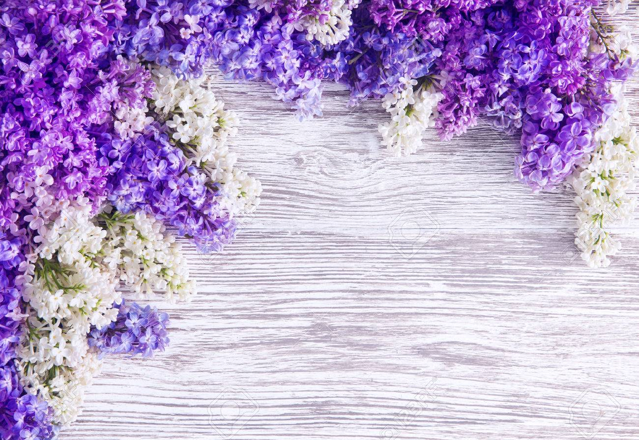 Lilac Flower Background, Blooms Pink Flowers on Wood Plank - 55588970