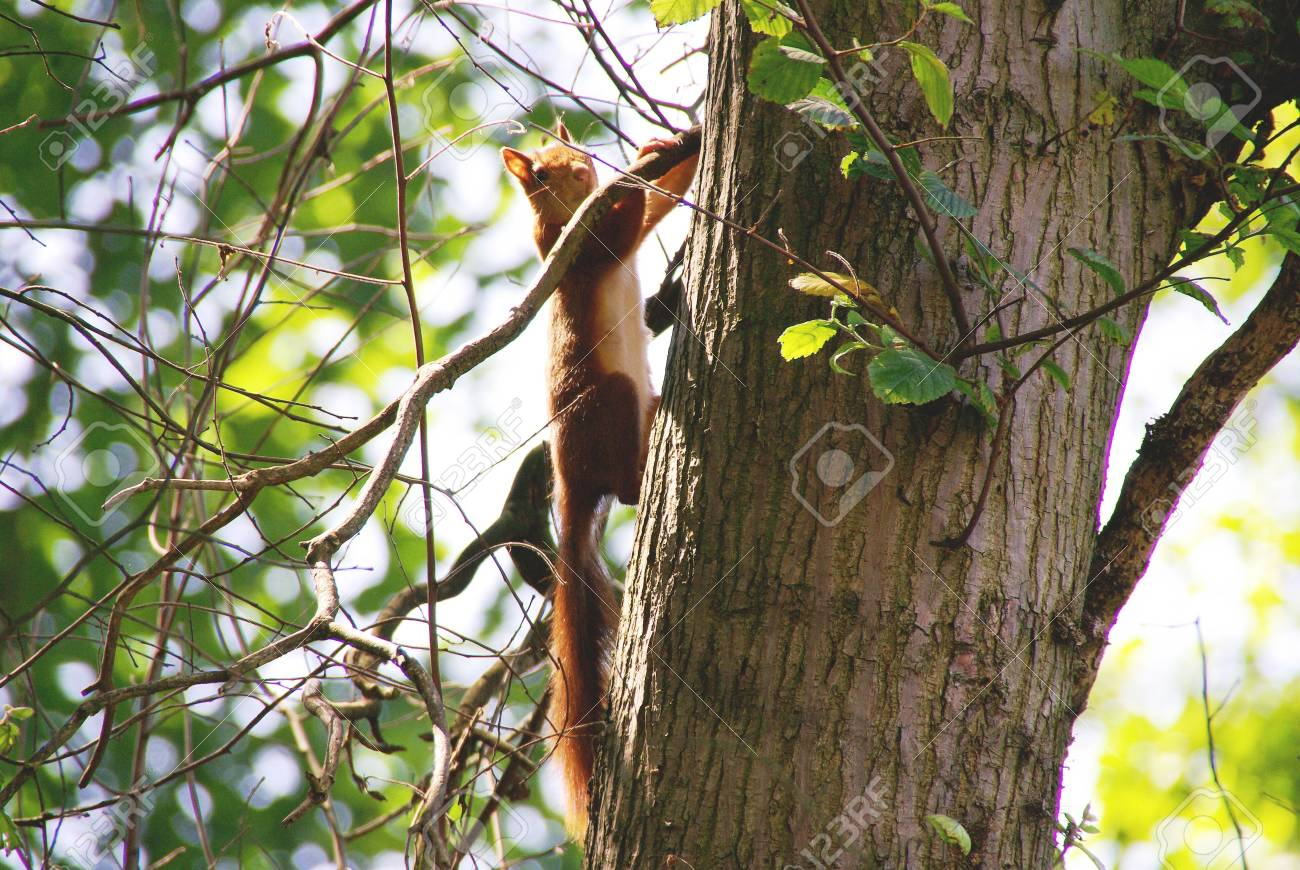 A squirrel in a tree Stock Photo - 3389074