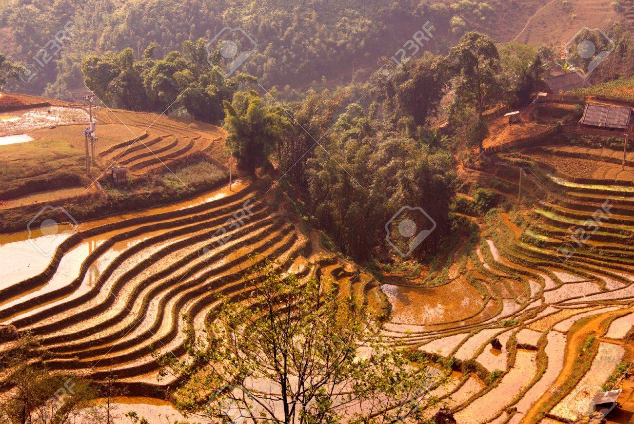 Rice field with terraces with red earth in the mountains near Sapa in Vietnam Stock Photo - 4288297