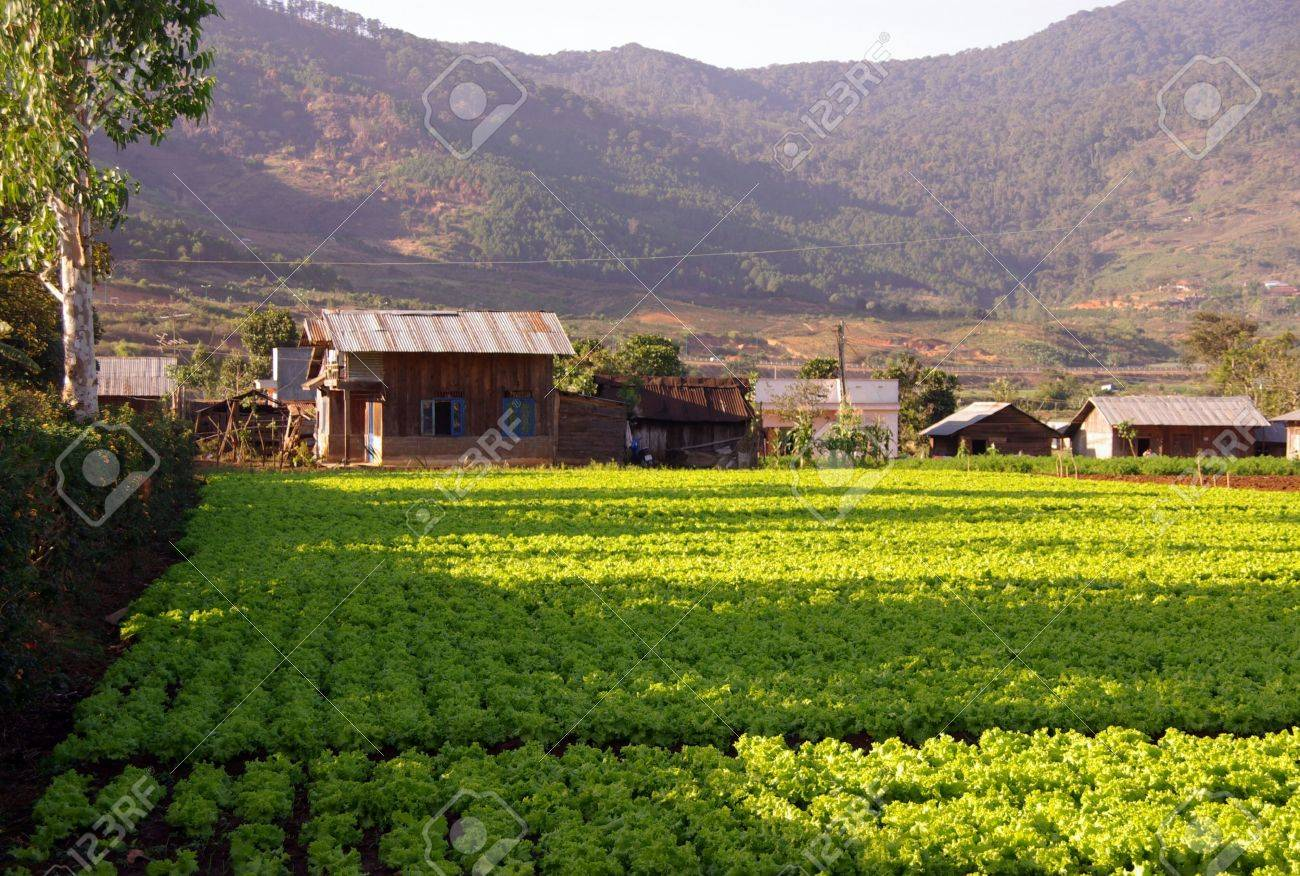 Agriculture in Lang conga in Vietnam Stock Photo - 4299835