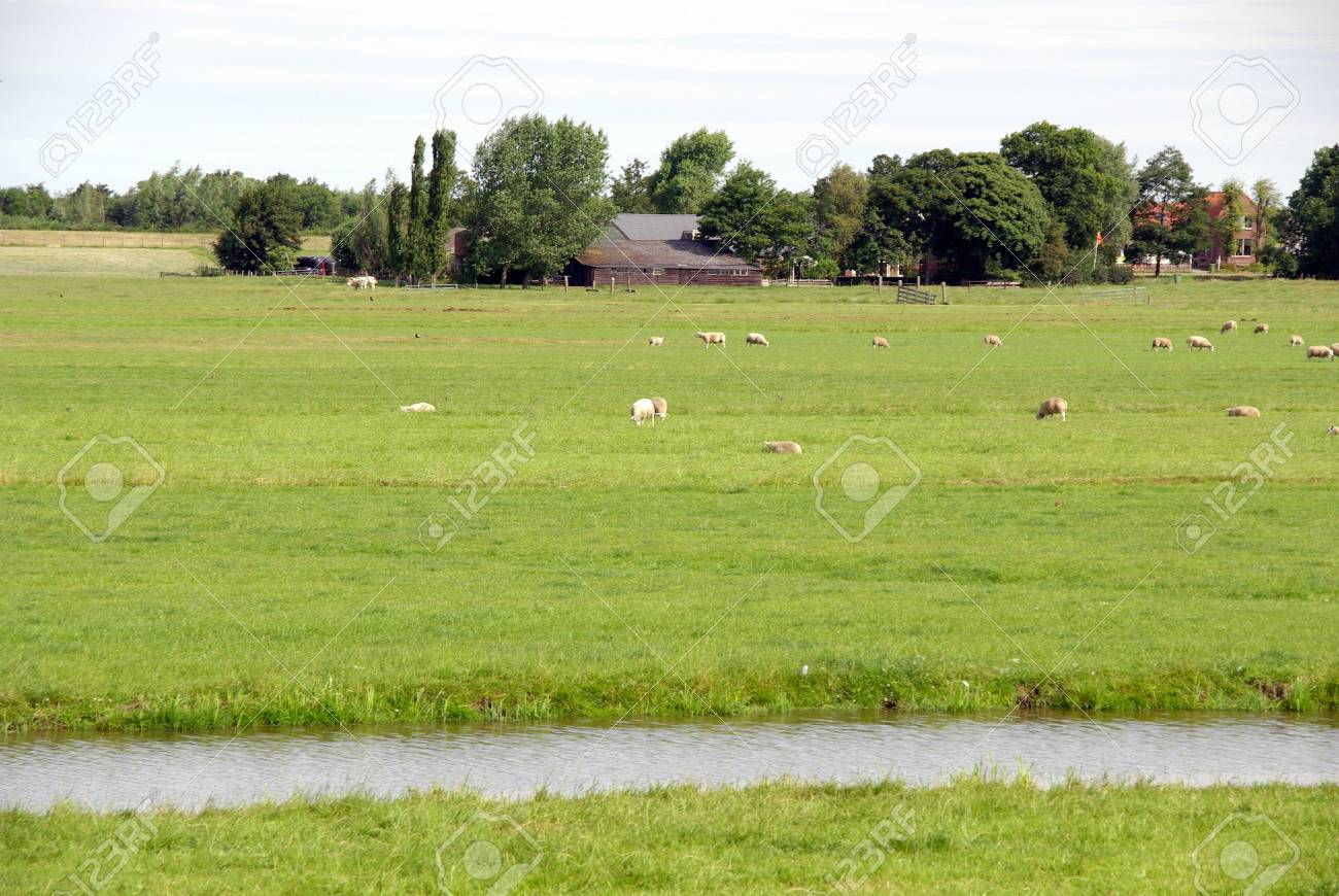 A farm with sheep Stock Photo - 7368014