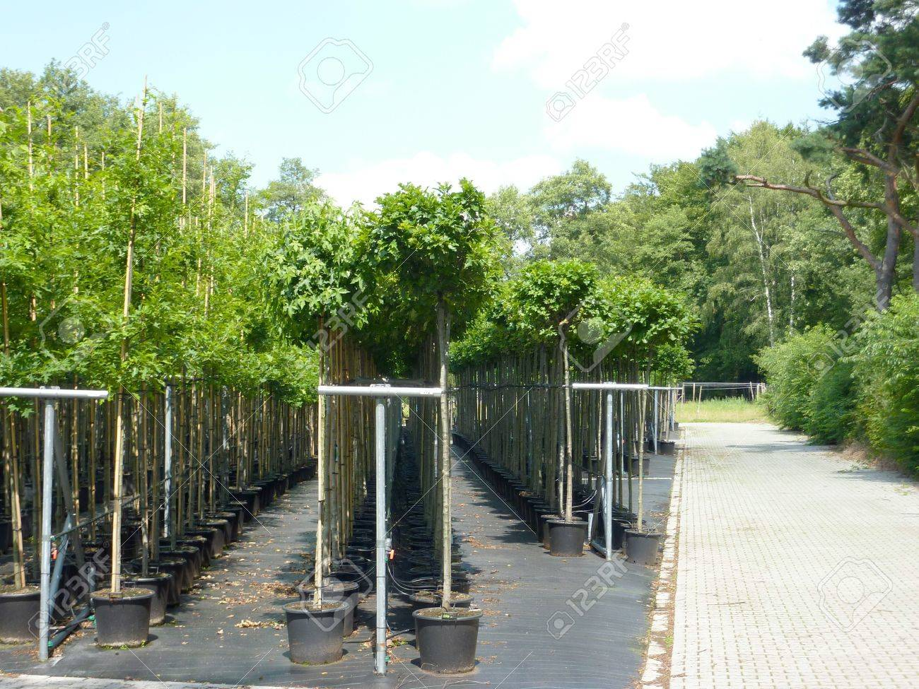 A tree nursery with young trees in plastic containers Stock Photo - 12506320