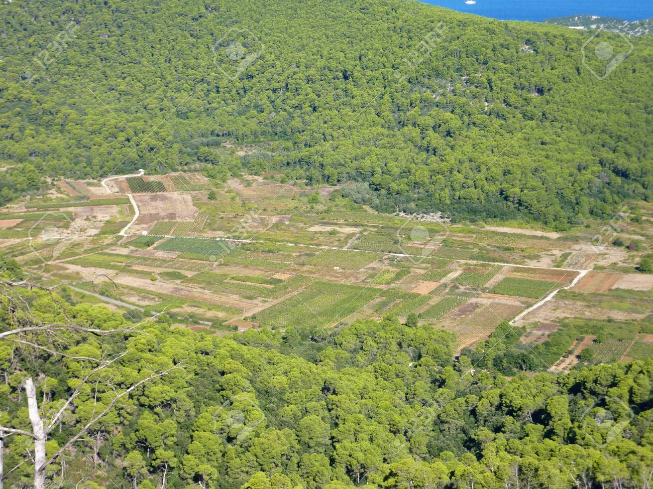 Small scale agriculture at the Croatian island Lastovo Stock Photo - 12635987