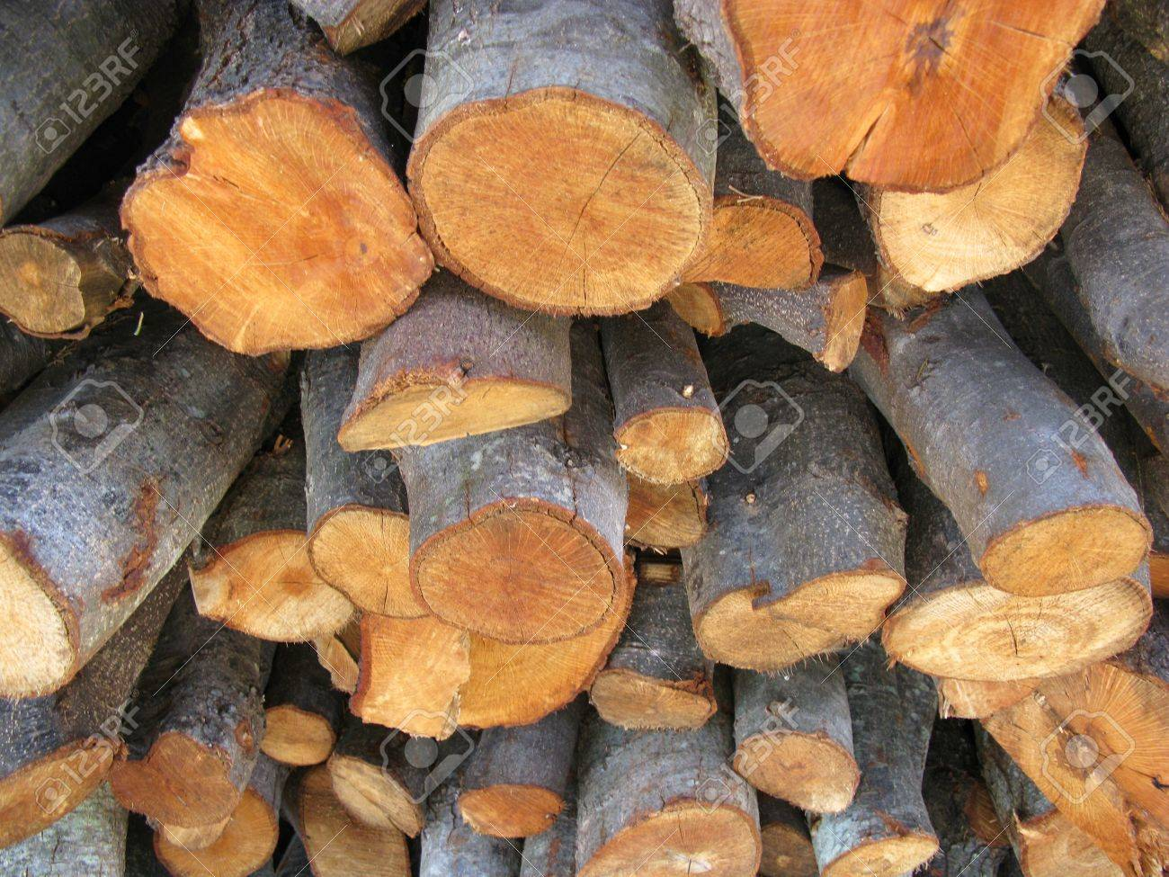 Holm Oak Wood For The Fire Place Stock Photo, Picture And Royalty ...