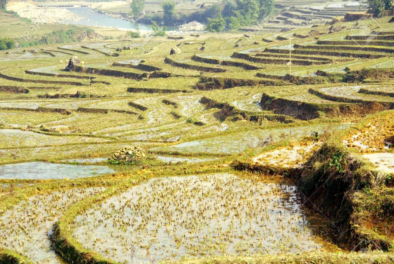Cultivos De Arroz En Terrazas En Las Montañas Cerca De Sapa En Vietnam