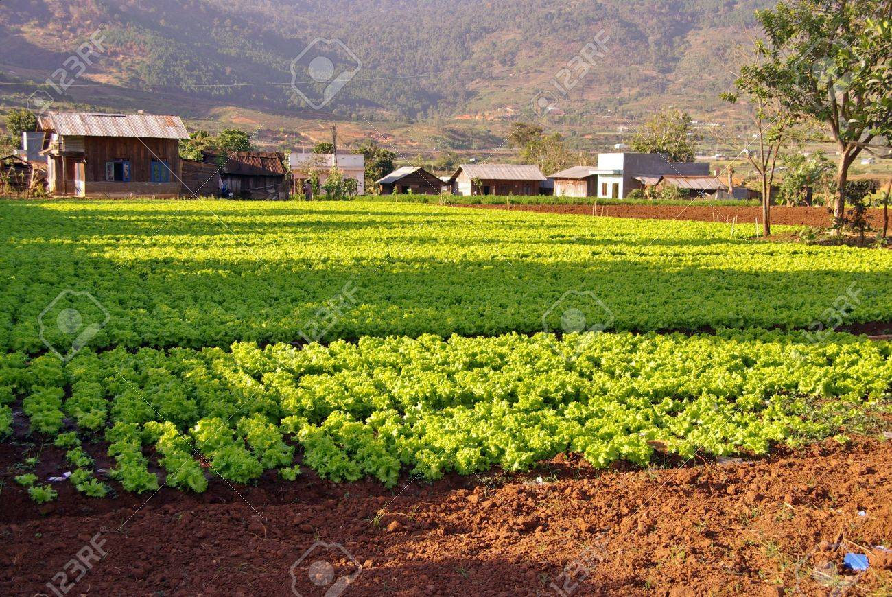 Agriculture in the village Lang Conga in Vietnam Stock Photo - 17456300