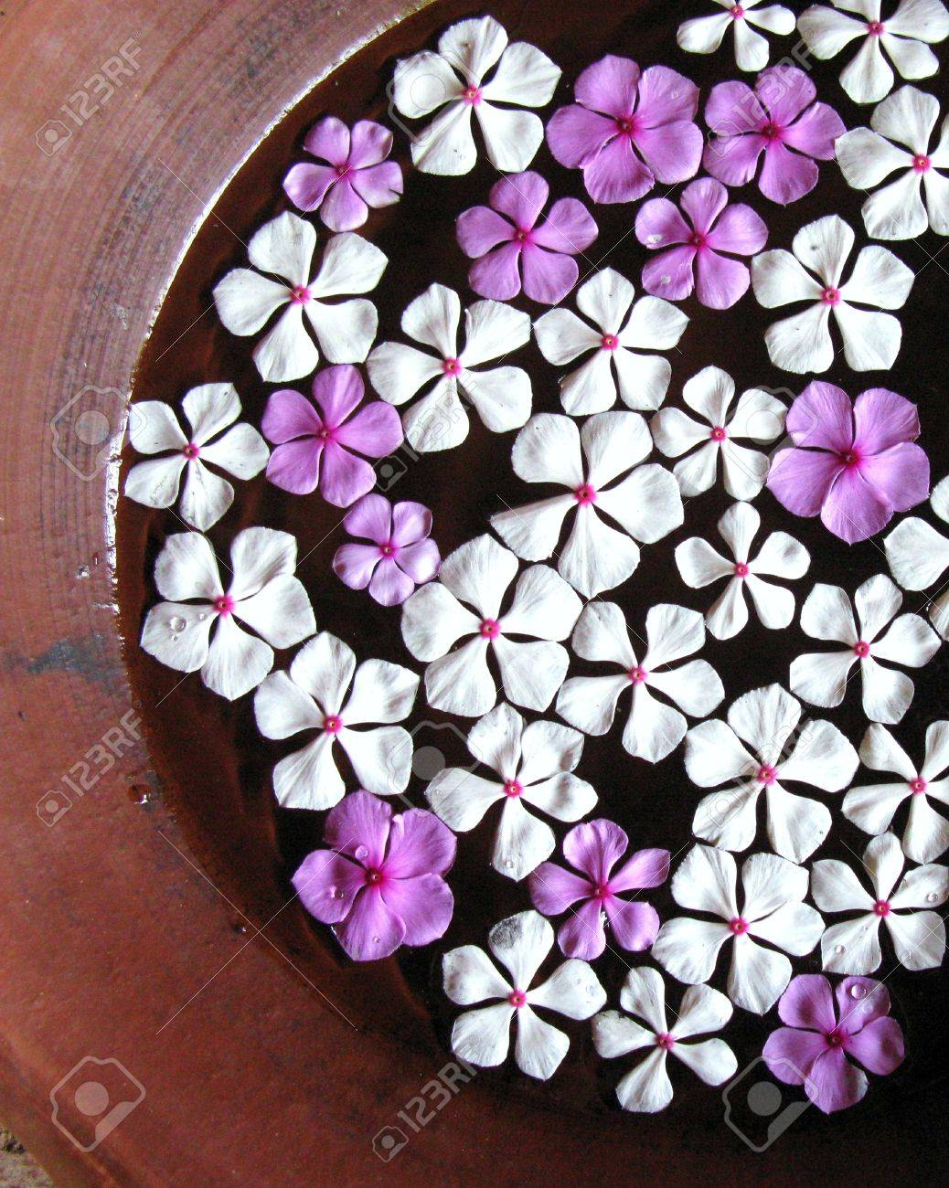 White and pink jasmine flowers floating in a bowl stock photo stock photo white and pink jasmine flowers floating in a bowl izmirmasajfo