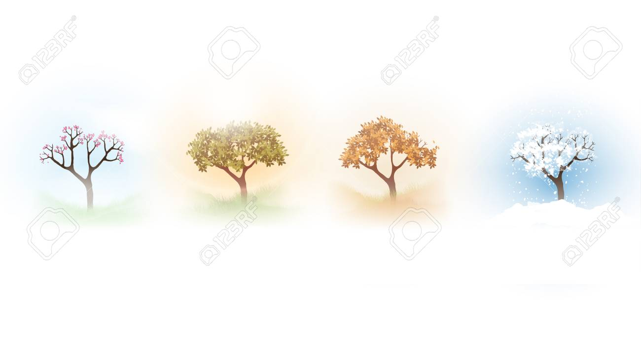 Vector illustration of a tree in four different seasons. - 98084807