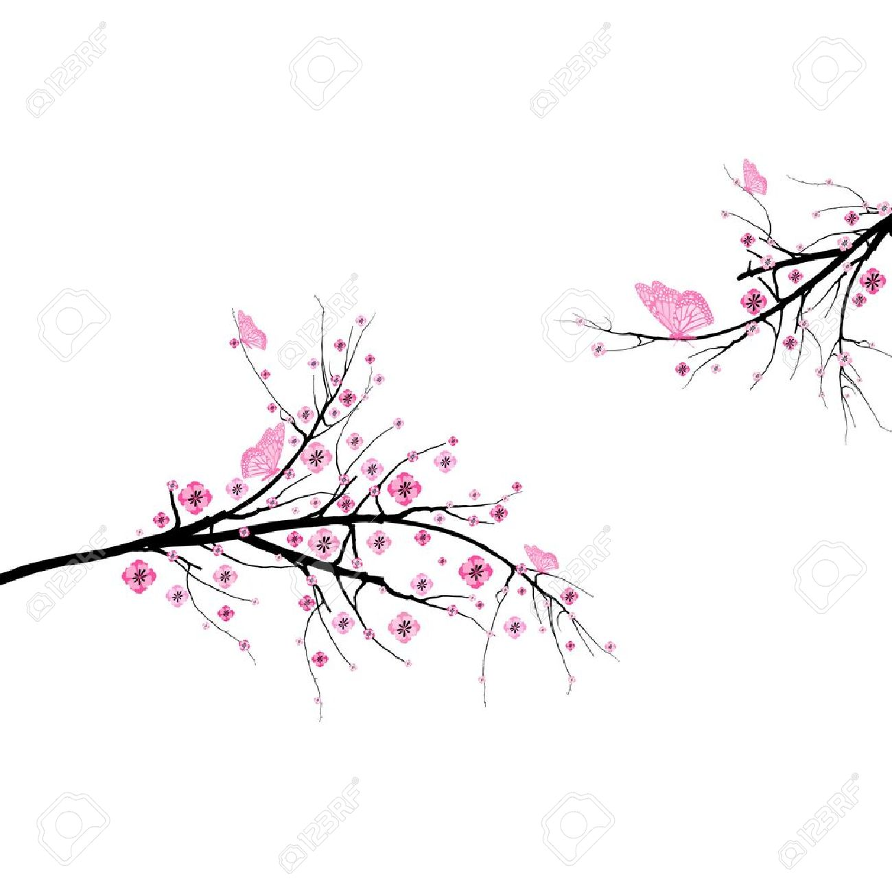 Beautiful blossom cherry and butterfly isolated on white background Stock Vector - 11586074