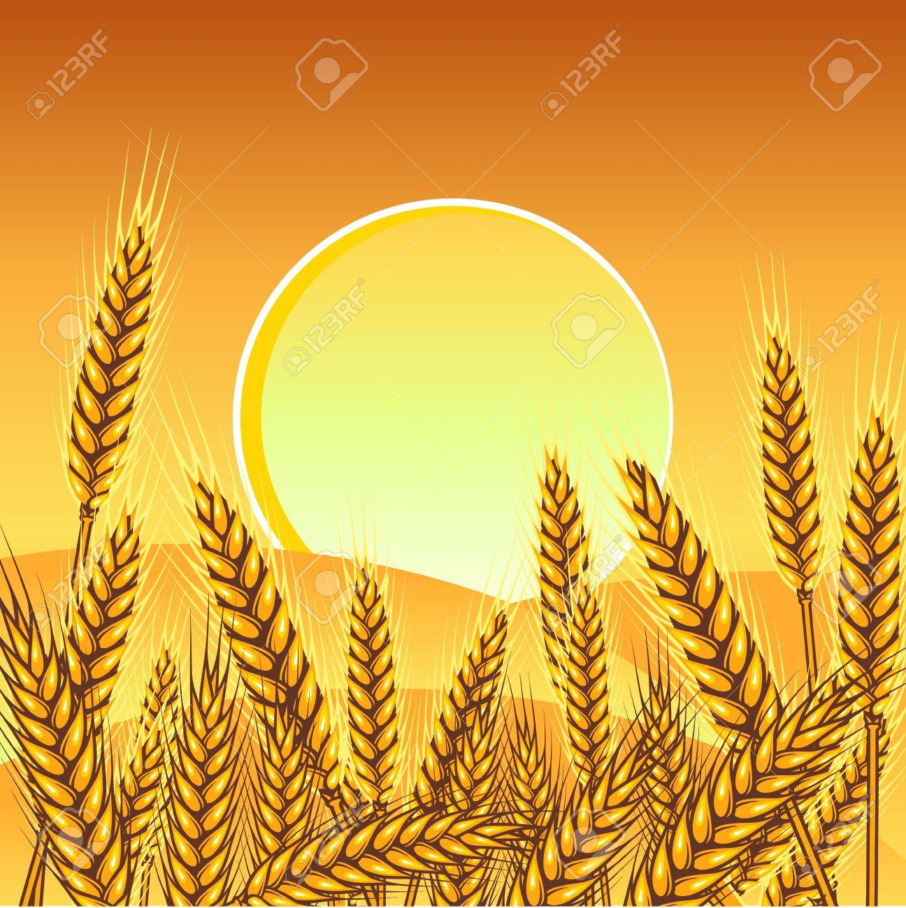 Background with ripe yellow wheat ears, vector illustration Stock Vector - 13288485