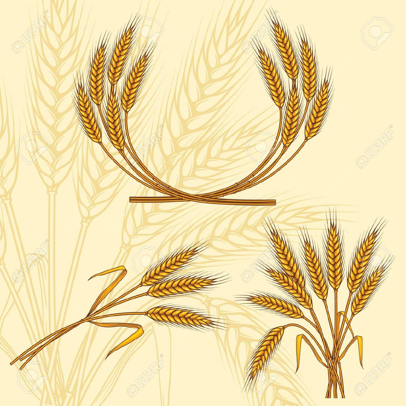 Background with ripe yellow wheat ears, vector illustration Stock Vector - 13288484