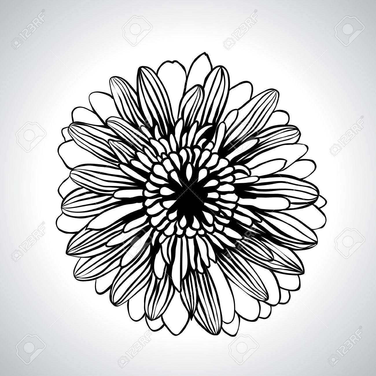 hand draw flowers set isolated on white Stock Vector - 13609460