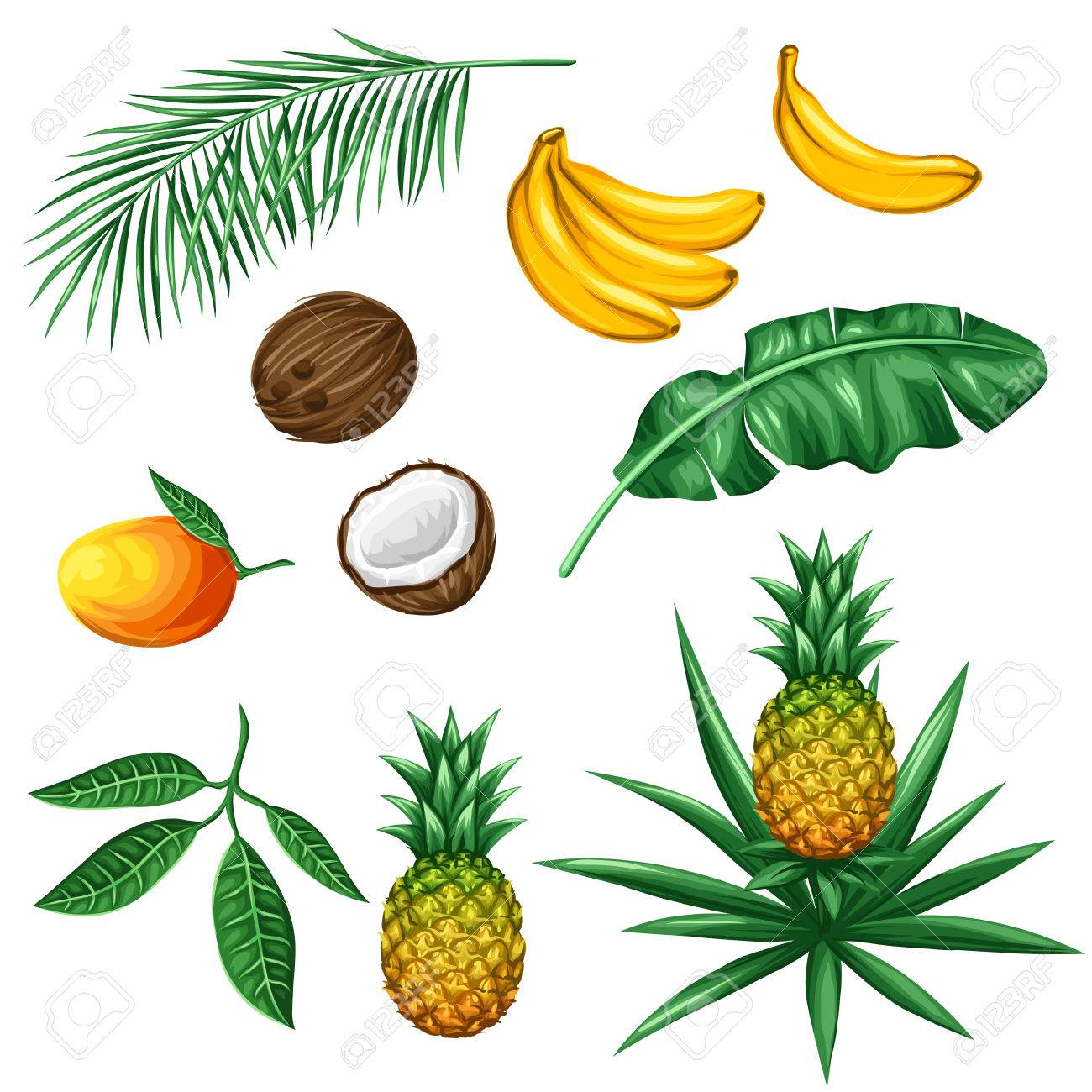 Set of tropical fruits and leaves. Objects for decoration, design on advertising booklets, packaging, menu, flayers. - 55577741