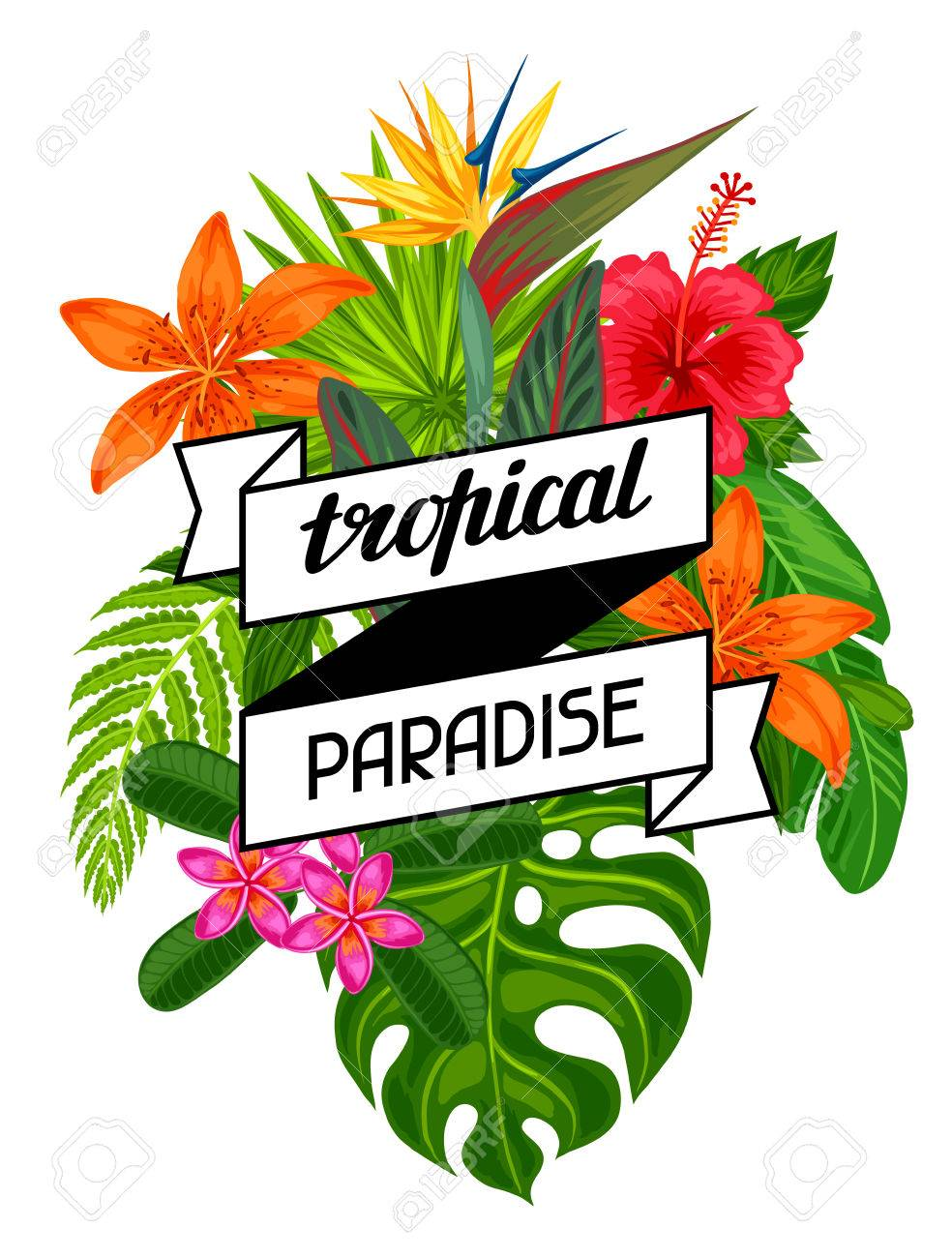Tropical paradise card with stylized leaves and flowers. Image for advertising booklets, banners, flayers. - 55577787