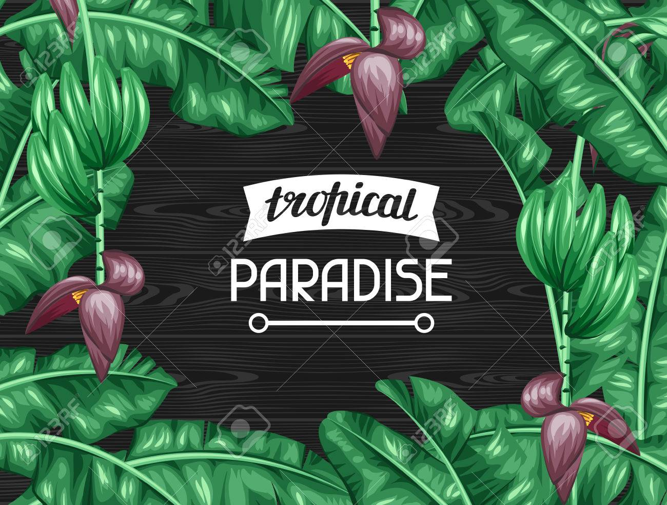 Frame with banana leaves. Decorative image of tropical foliage, flowers and fruits. Design for advertising booklets, banners, flayers, cards. - 55577915