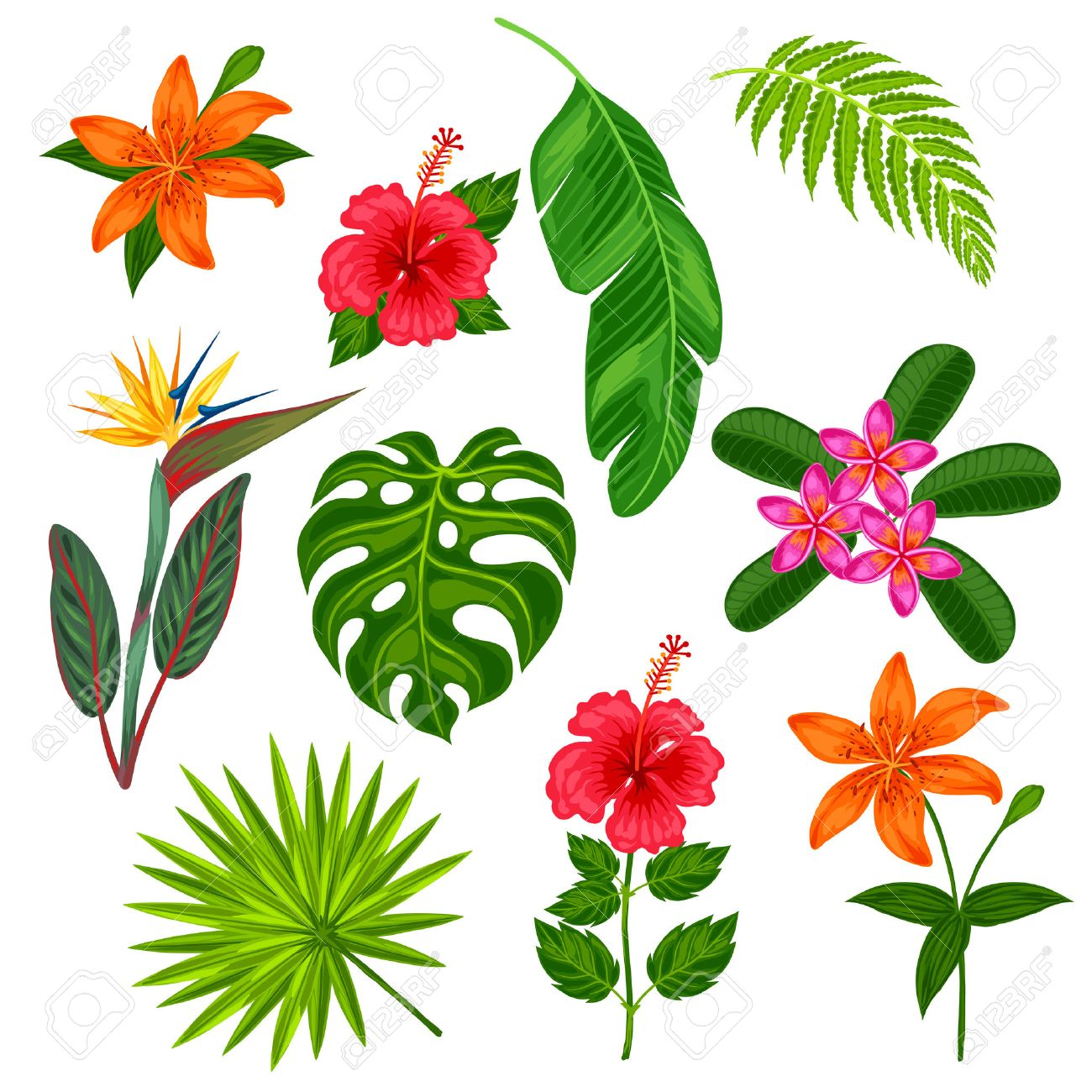 Set of stylized tropical plants, leaves and flowers. Objects for decoration, design on advertising booklets, banners, flayers. - 55793084