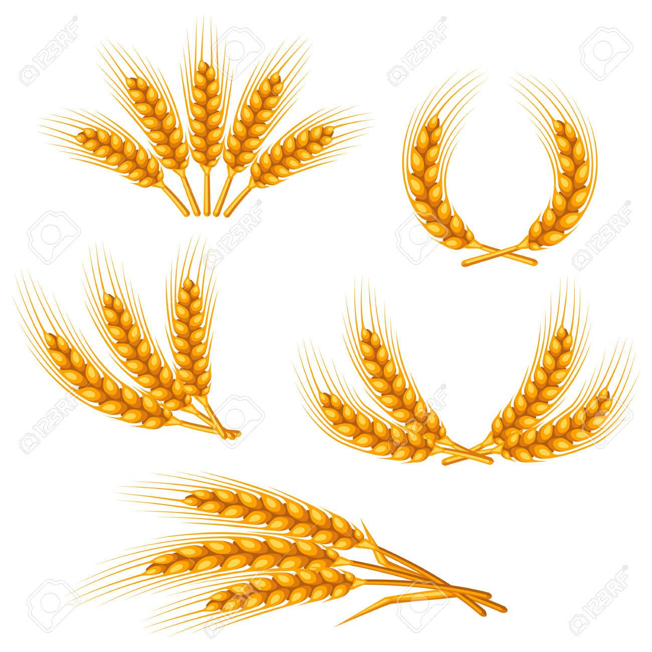 Design elements with wheat. Agricultural image natural golden ears of barley or rye. Objects for decoration bread packaging, beer labels. - 58135489