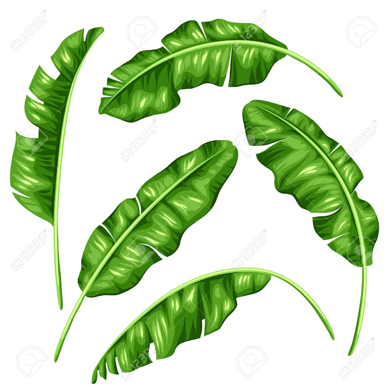 Banana Leaves Set Image Of Decorative Tropical Foliage Stock Vector