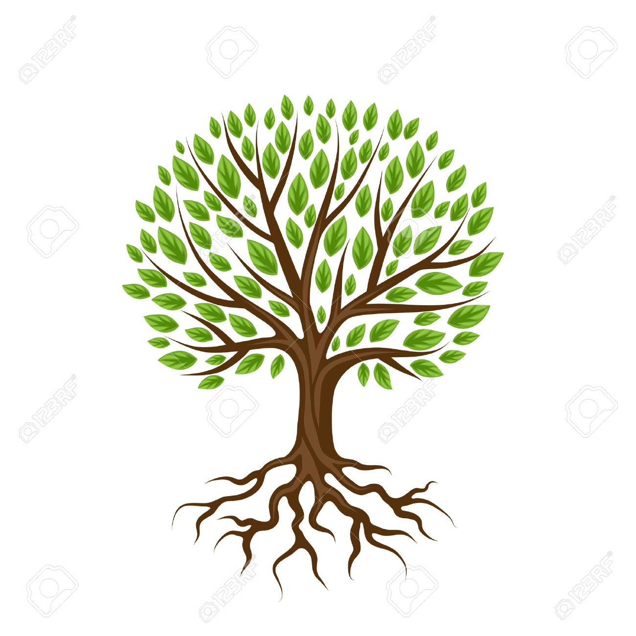 Tree Roots Stock Photos. Royalty Free Tree Roots Images