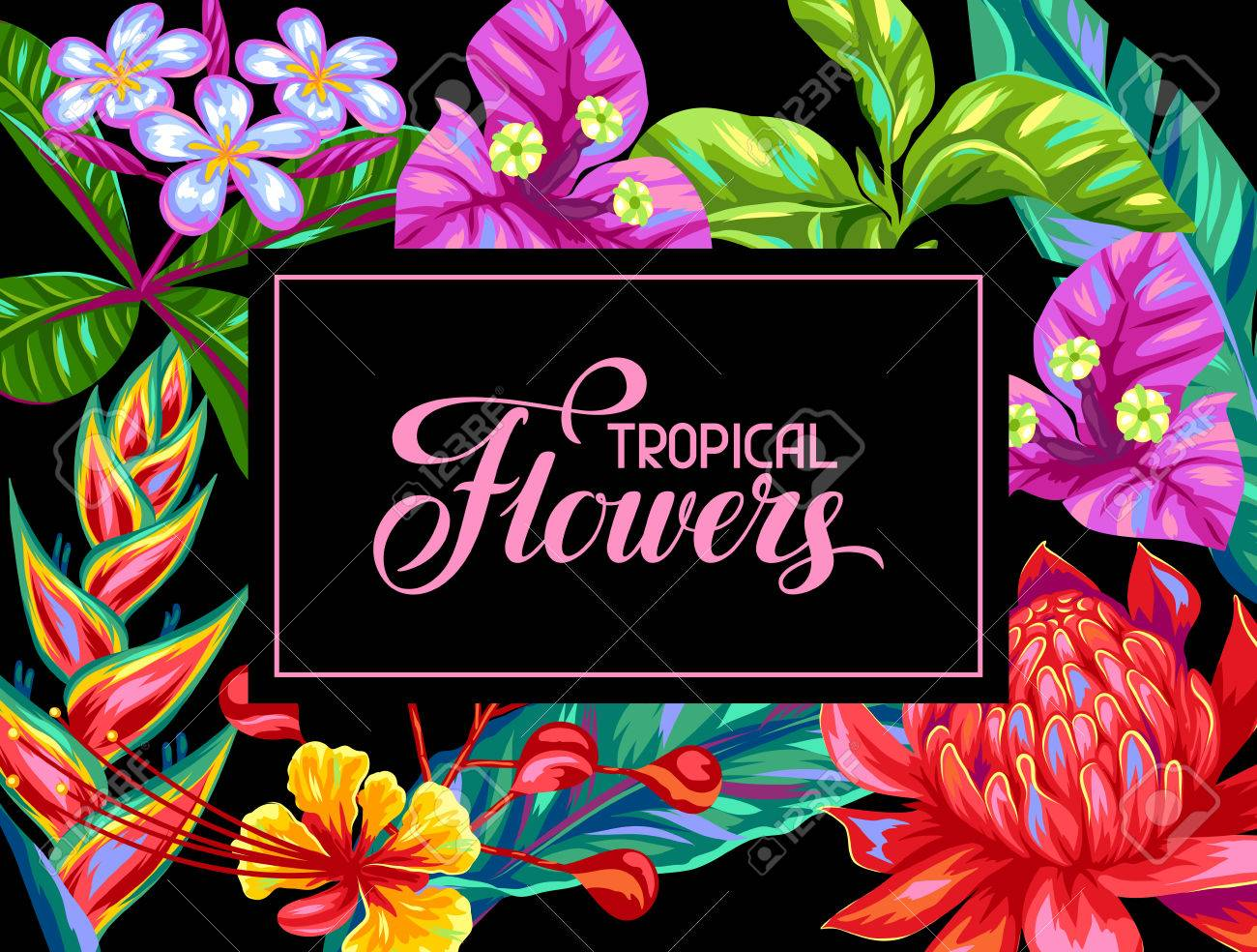 Invitation card with Thailand flowers. Tropical multicolor plants, leaves and buds. - 67192369