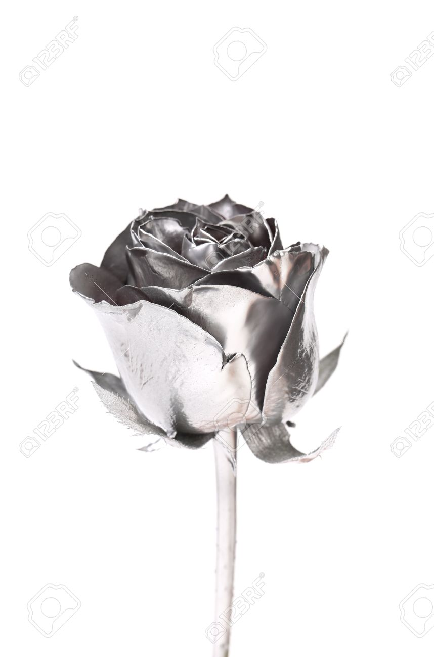 The Photo Of Beautiful Silver Rose On A White Background Stock