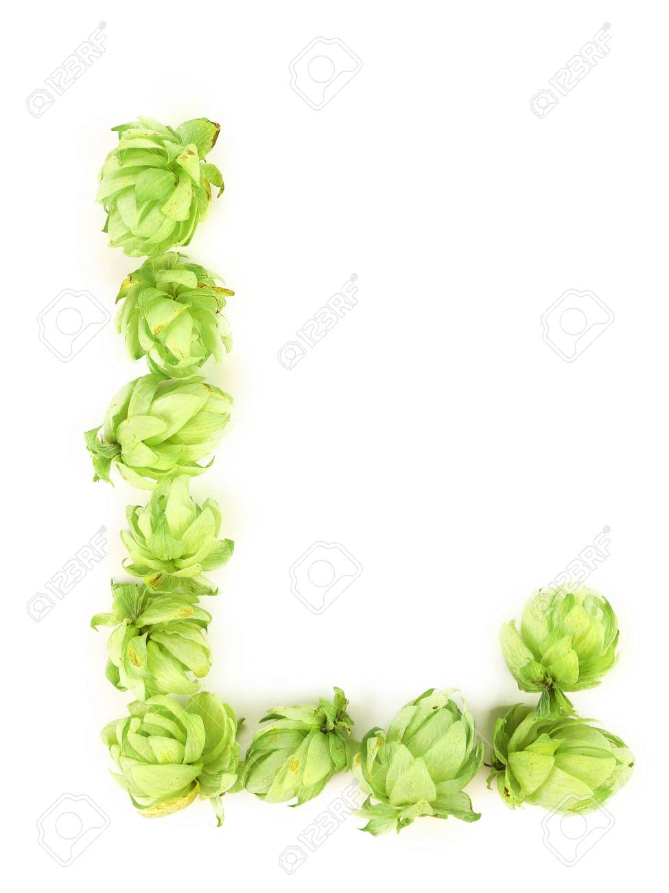 Hop flowers laid in form of letter L. Isolated on a white background. Stock Photo - 23533350
