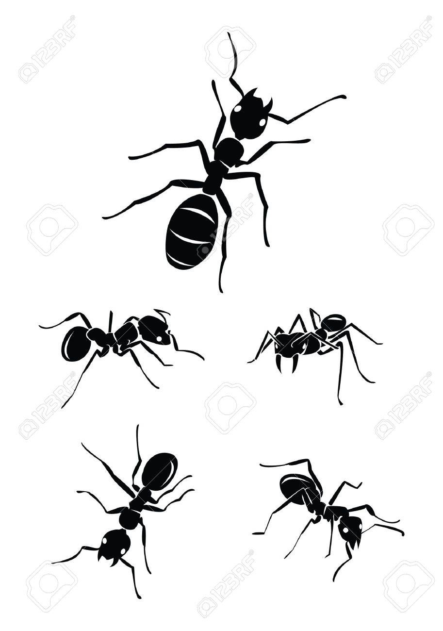 ant Collection Set Stock Vector - 17930048